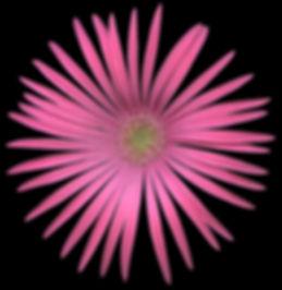 Delosperma_img024.jpg