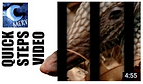 True Facts about Armadillo Trapping