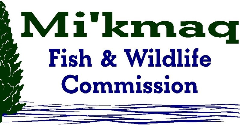 mi'kmaq fish & wildlife commision