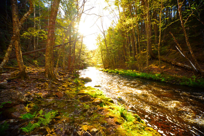 The Black Brook of Gold
