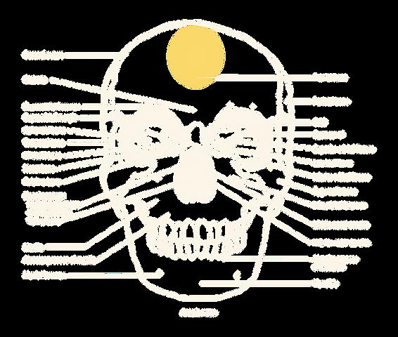 human skull, phrenology, seat of comparative sagacity