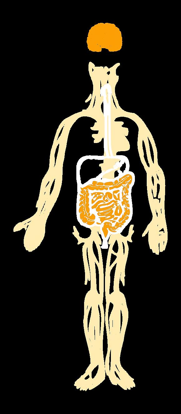 Brain Gut Microbiome Connection