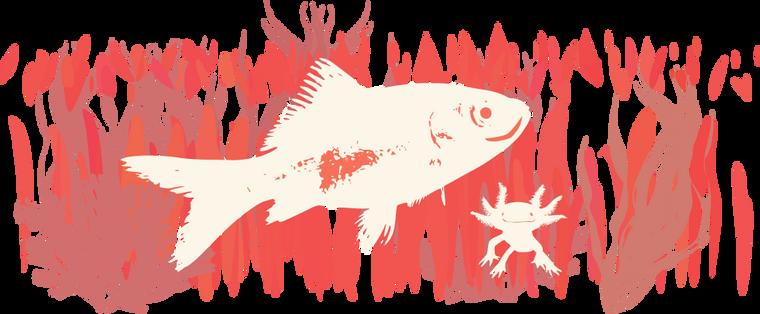 Happy Fish and Axolotl (sp?)