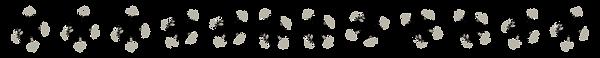 Image of an exosome: neuroscience, neurobiology,  biochemistry, extracellular vesicles, ECV, EV, microvesicles