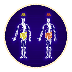 Digestive System, Circulatory System, Nervous system