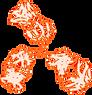 Antibody.png