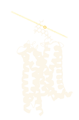 THC, tetrahydrocannabinol, binding to cannabinoid receptor, CB1