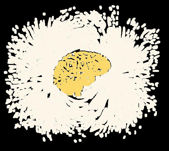 fMRI, Brain images, MRI Brain, neuroimaging, brain, psychology