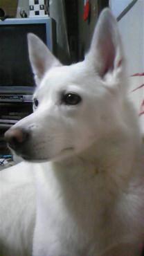 中型犬 15kg 未満28,000円