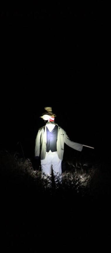 ....c'era sempre uno spaventapasseri che gli indicava la via...