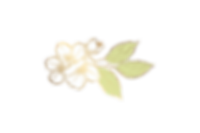 Abelia%20Salon-%20flower_edited.png