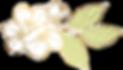 Abelia%2520Salon-%2520flower_edited_edit