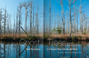 What are Ghost Trees?
