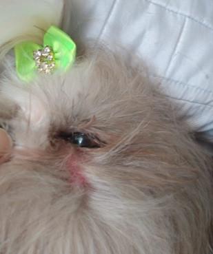 Jararaca é encontrada em quintal de residência e pica cachorro da família em Francisco Beltrão