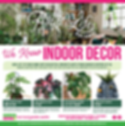 indoor plant catalogue.PNG