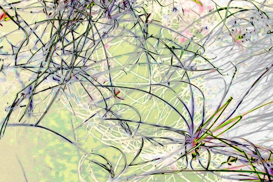 Reeds 8