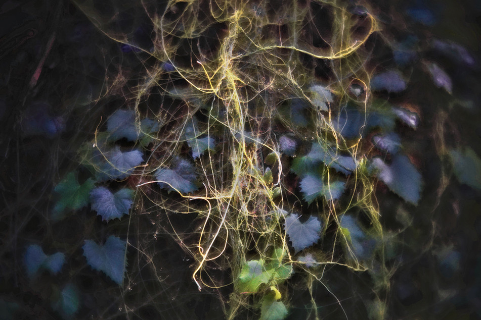 The Holy Tangle 5
