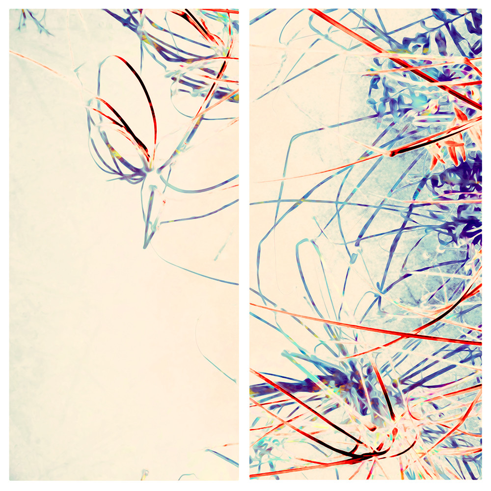 Morning Reeds Diptych