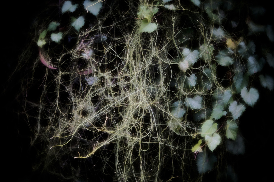 The Holy Tangle 8