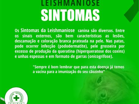 Sintomas da Leishmaniose
