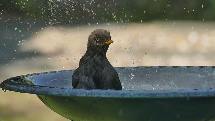 Bathtime by Lucy Goodson 28 May 2020.jpg