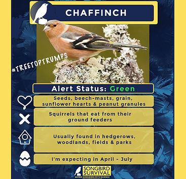 Chaffinch TreeTopTrump .jpg