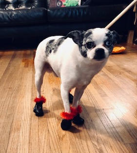 DOGGY SNOW BOOTIES