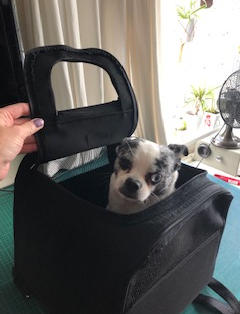 MOTORCYCLE DOG CARRIER