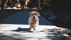 Help je hond door rustig te blijven als hij dat even niet kan