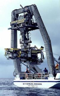 Calamar 1.jpg
