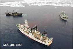 SEA SHEPERD BALLENERO JAPONES KAIKO MARU