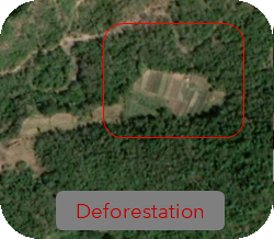 Deforestation_edited.png