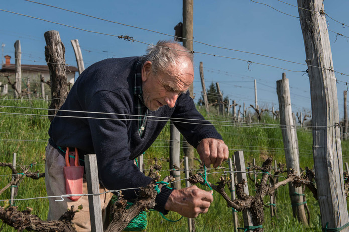 Klinec vineyard