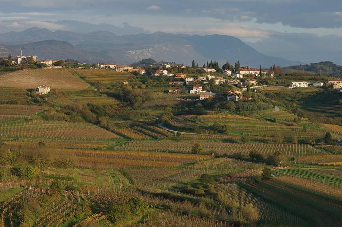 Klinec vineyard in Goriška Brda
