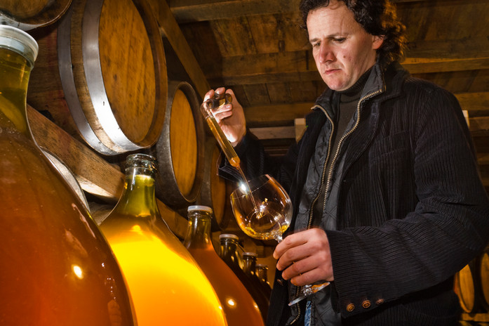 Čotar wine testing