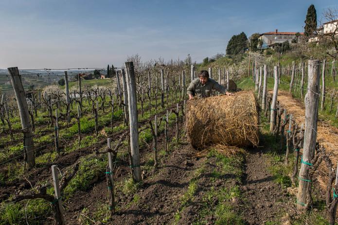 Klinec vineyard in natural setting