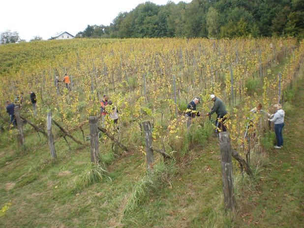 Šuman vineyard