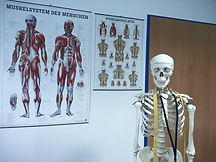 skeleton-645535_1920_edited.jpg
