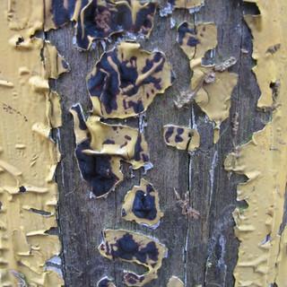 Peeling Paint - 102 - Penryn CC.jpg
