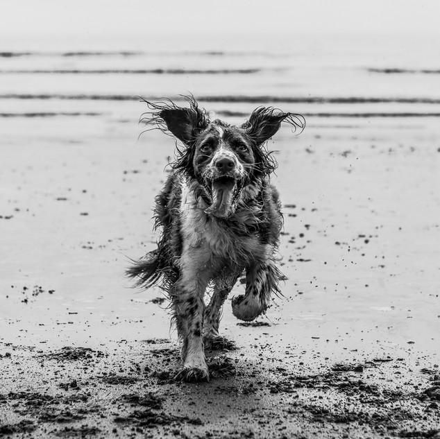Run like the wind-122-Penryn CC.jpg