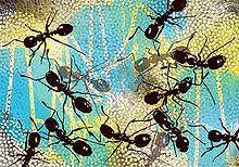ants sm.jpg