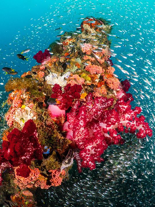 Vivid Reef