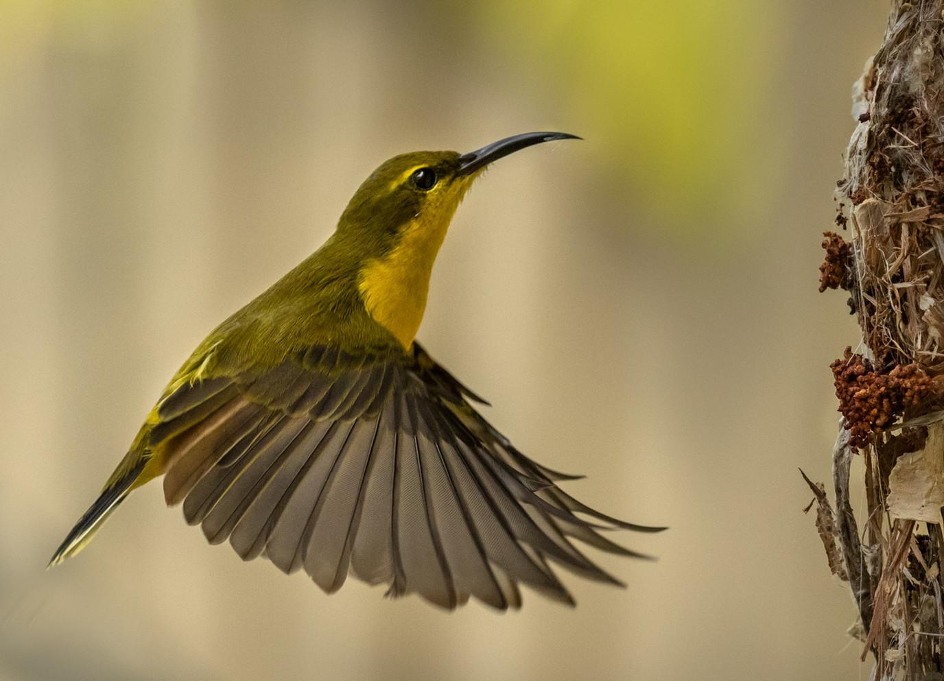 Busy Bird