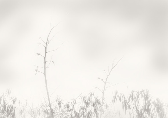 Lonely in the Mist