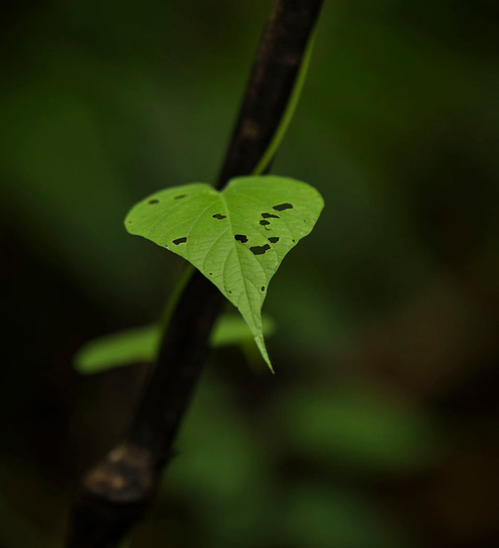 Heart in the rainforest