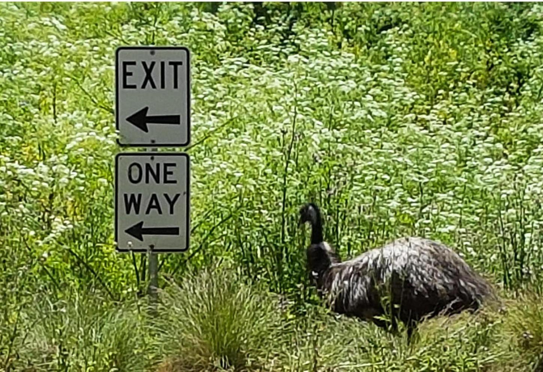 Clever Emu