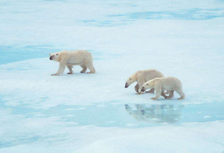BRUNNER_Polar-Bears.jpg