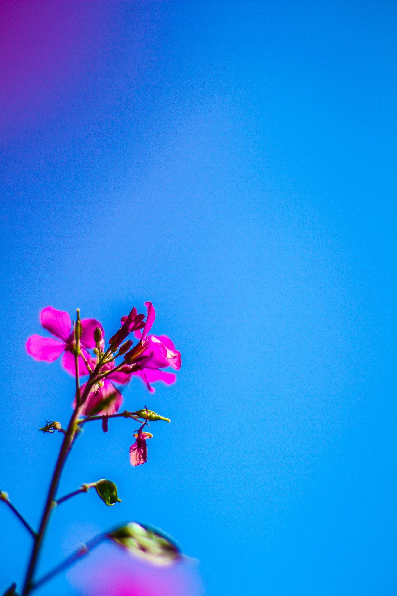 Flower, Bruge