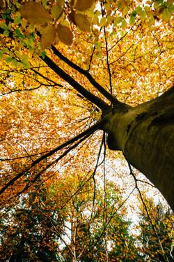 Autumn at Winding Walks, Scotland