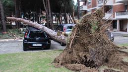 Il pino del vicino: pericolosità e rimedi